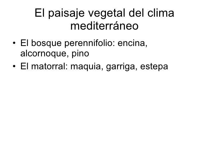 El paisaje vegetal del clima mediterráneo <ul><li>El bosque perennifolio: encina, alcornoque, pino </li></ul><ul><li>El ma...