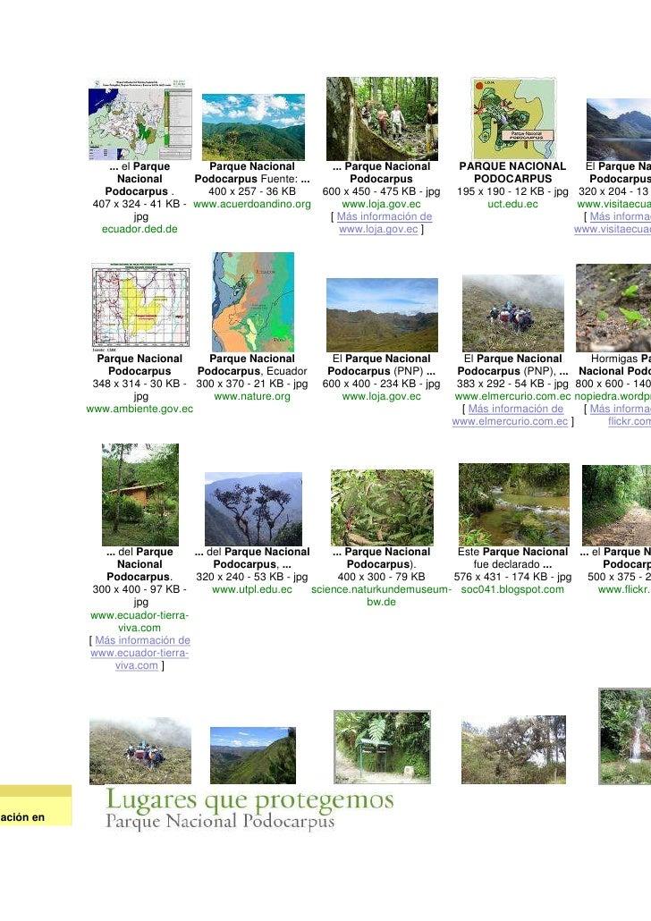 El parque nacional podocarpus espinosa