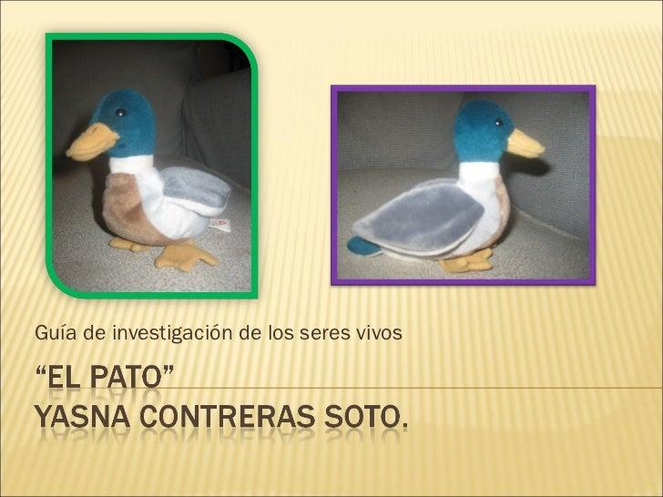 """Aprendamos sobre """"El pato"""""""