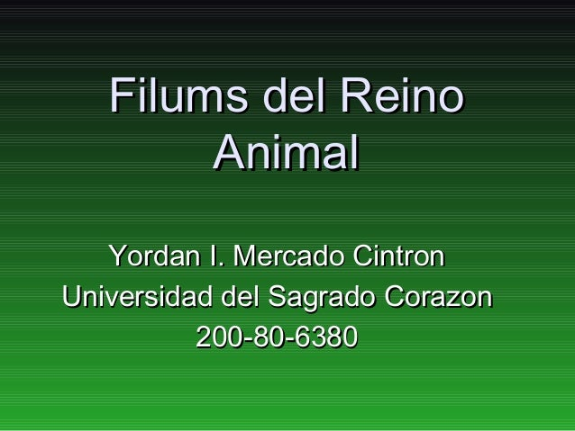 Filums del Reino        Animal   Yordan I. Mercado CintronUniversidad del Sagrado Corazon          200-80-6380