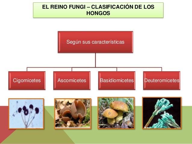 Los síntomas del hongo de las uñas del pie
