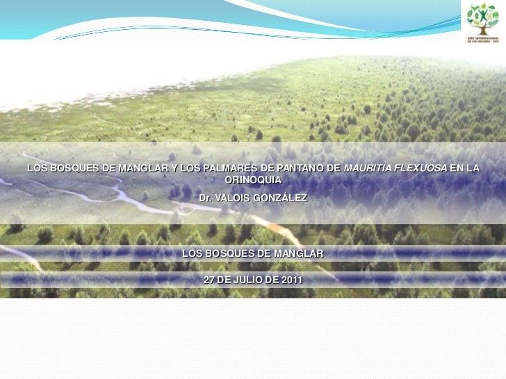 LOS BOSQUES DE MANGLAR Y LOS PALMARES DE PANTANO DE MAURITIA FLEXUOSA EN LA ORINOQUIA <br />Dr. VALOIS GONZÁLEZ <br />LOS ...