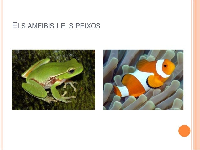 ELS AMFIBIS I ELS PEIXOS