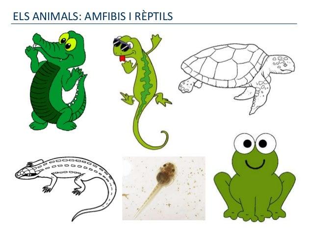 ELS ANIMALS: AMFIBIS I RÈPTILS