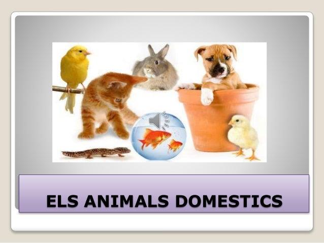 ELS ANIMALS DOMESTICS