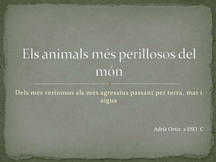 Els Animals MéS Perillosos Del MóN