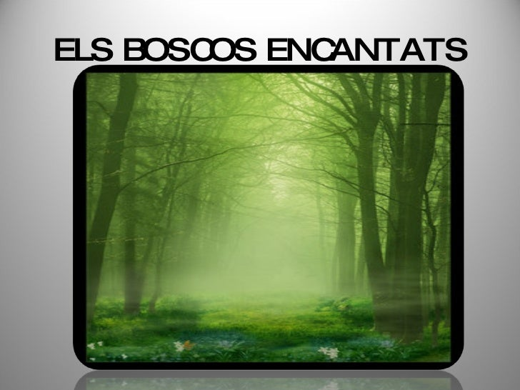 Els Boscos Encantats