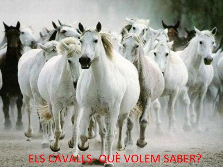 ELS CAVALLS- QUÈ VOLEM SABER?