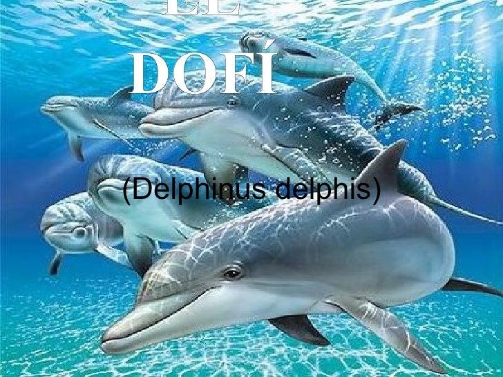 (Delphinus delphis) EL DOFÍ