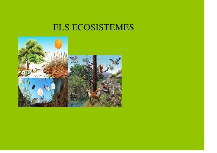 ELS ECOSISTEMES
