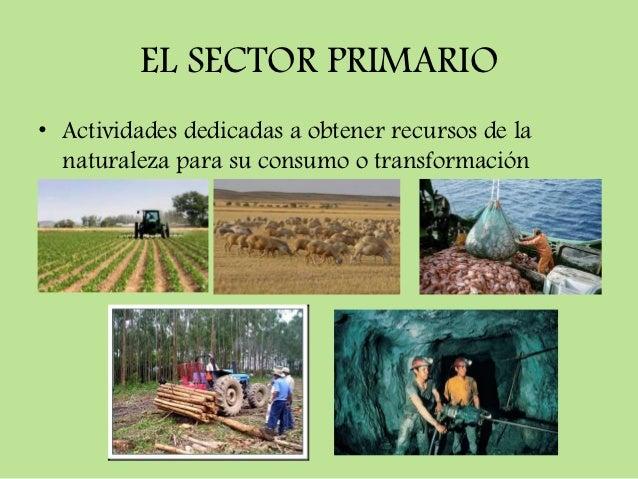 EL SECTOR PRIMARIO• Actividades dedicadas a obtener recursos de la  naturaleza para su consumo o transformación