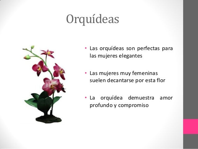 Rosas amarillas related keywords suggestions rosas - Rosas amarillas significado ...