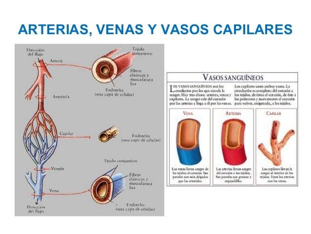 La historia clínica la trombosis de las venas profundas de la extremidad inferior izquierda