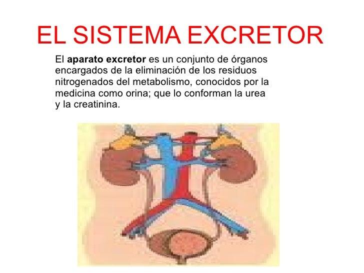 EL SISTEMA EXCRETOR El  aparato excretor  es un conjunto de  órganos  encargados de la eliminación de los residuos  nitrog...