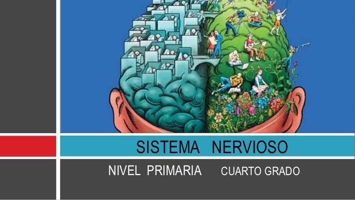 SISTEMA NERVIOSONIVEL PRIMARIA   CUARTO GRADO