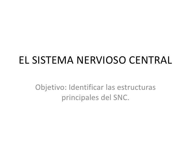 EL SISTEMA NERVIOSO CENTRAL <br />Objetivo: Identificar las estructuras principales del SNC. <br />