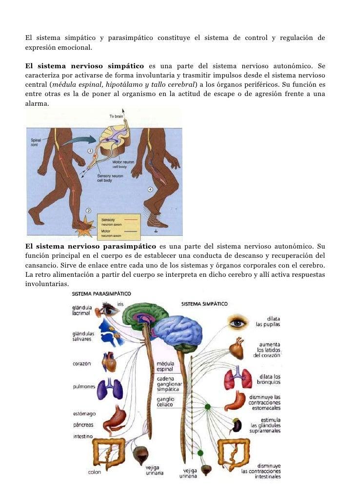 El sistema simpático y parasimpático constituye el sistema de control y regulación de expresión emocional.<br /><br />El ...
