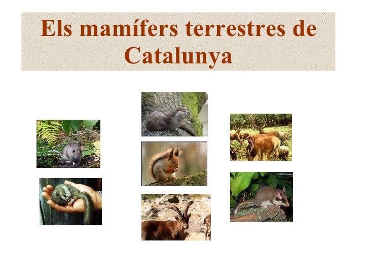 Els mamífers terrestres de Catalunya