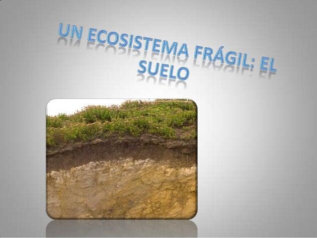 ¿Qué es suelo? • Llamamos suelo al manto de materiales sueltos situado sobre la superficie de los continentes que mantiene...
