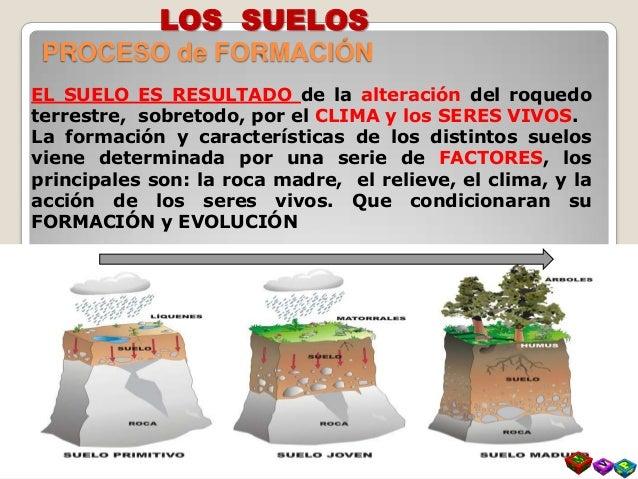 El suelo formacion y composicion for Proceso de formacion del suelo
