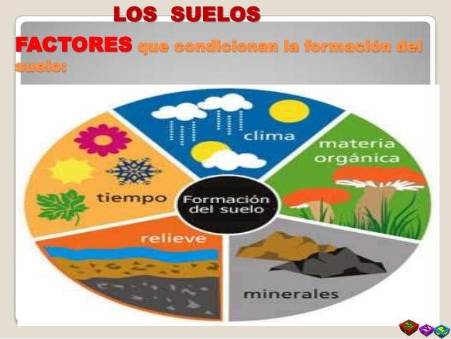 El suelo formacion y composicion for Formacion de los suelos