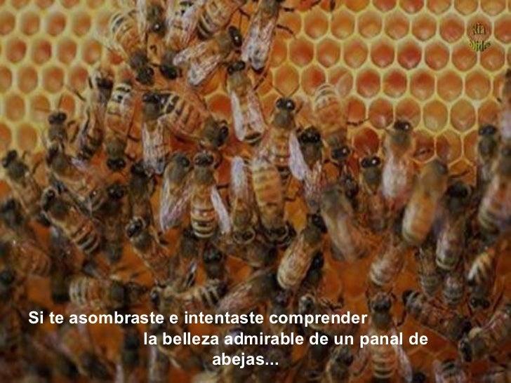 Si te asombraste e intentaste comprender la belleza admirable de un panal de abejas...