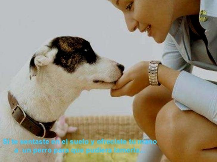 Si te sentaste en el suelo y ofreciste tu mano a un perro para que pudiera lamerla...