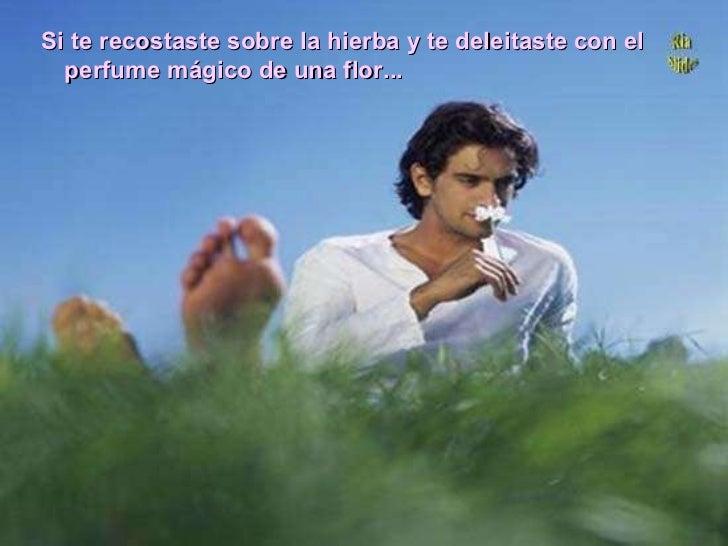 Si te recostaste sobre la hierba y te deleitaste con el perfume mágico de una flor...