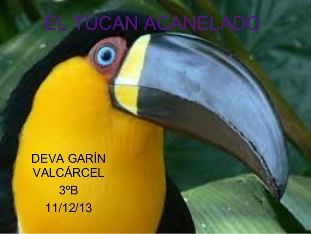 EL TUCAN ACANELADO  DEVA GARÍN VALCÁRCEL 3ºB 11/12/13