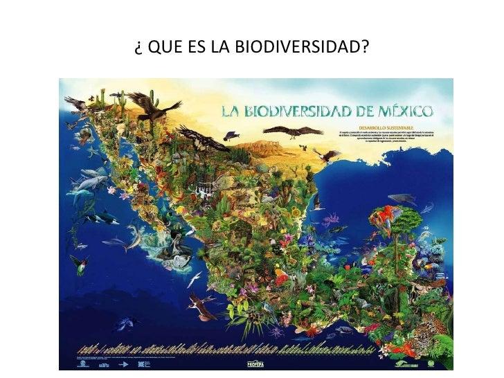 LA BIODIVERSIDAD: RESULTADO DE LA EVOLUCIÓN