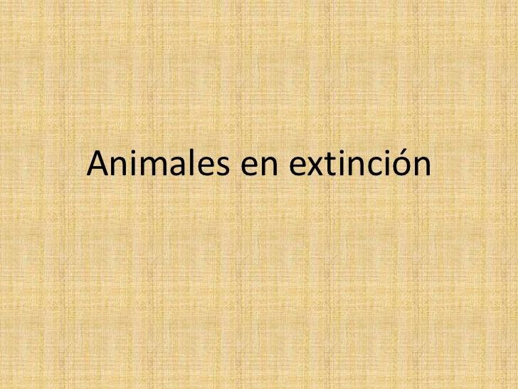 animal en extinción. (el yaguarete)