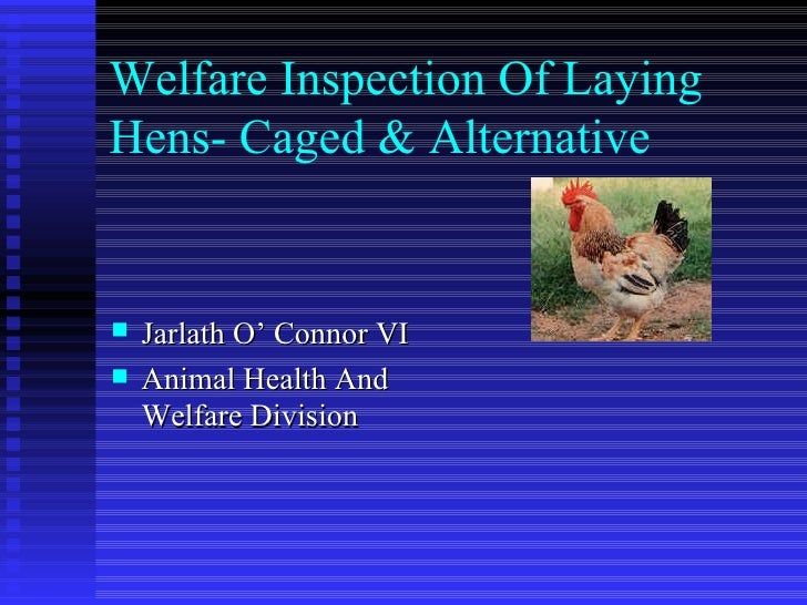 Welfare Inspection Of Laying Hens- Caged & Alternative <ul><li>Jarlath O' Connor VI </li></ul><ul><li>Animal Health And We...