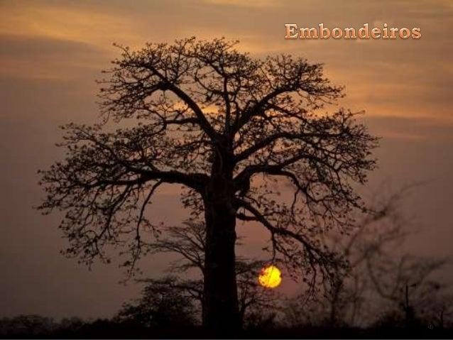 Kazuyoshi Nomachi Embondeiro Vejo-te solitário e fulgido Em fundo vermelho de sol poente Como monumento p´la natureza erig...