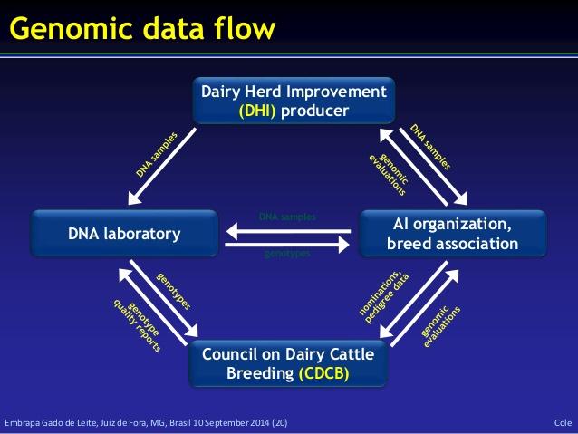 sample herd beef database