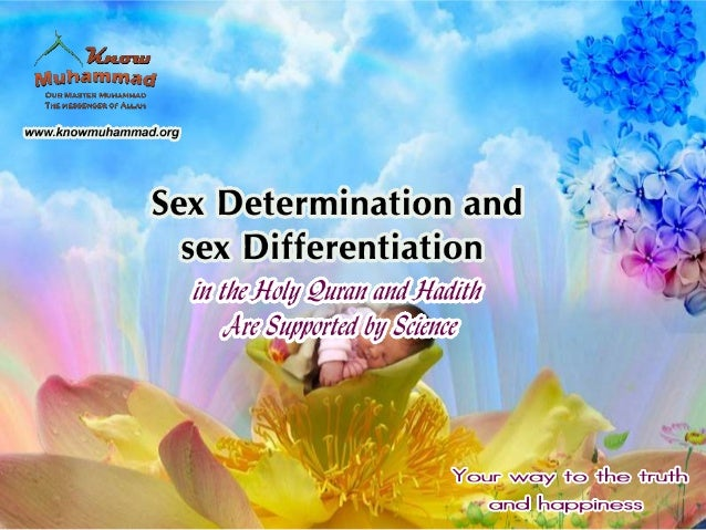 Three Main steps for human sex determination & differentiation 1-At the genetic level at the time of gamete fertilization....