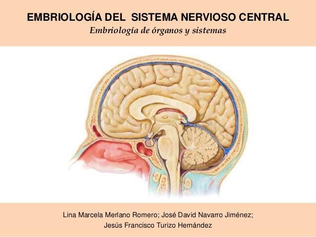 EMBRIOLOGÍA DEL SISTEMA NERVIOSO CENTRAL Embriología de órganos y sistemas  Lina Marcela Merlano Romero; José David Navarr...