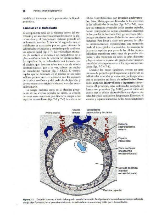 Embriología exposicion   langman 11ed