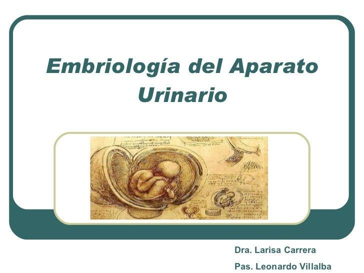 Embriología del Aparato Urinario Dra. Larisa Carrera Pas. Leonardo Villalba