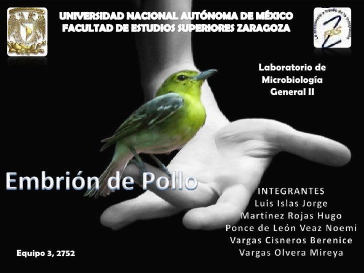 UNIVERSIDAD NACIONAL AUTÓNOMA DE MÉXICO<br />FACULTAD DE ESTUDIOS SUPERIORES ZARAGOZA<br />Laboratorio de Microbiología Ge...
