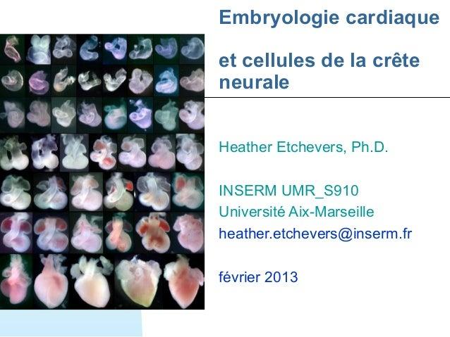 Embryologie cardiaqueet cellules de la crêteneuraleHeather Etchevers, Ph.D.INSERM UMR_S910Université Aix-Marseilleheather....