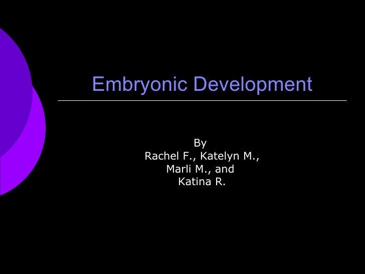 Embryonic Development By  Rachel F., Katelyn M., Marli M., and  Katina R.