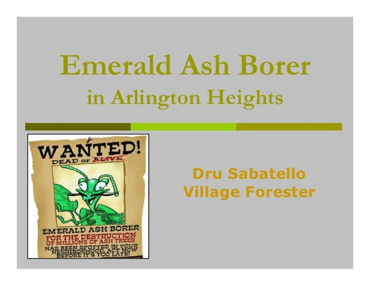 Emerald Ash Borer in Arlington Heights           Dru Sabatello          Village Forester