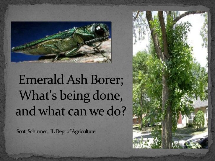 Emerald Ash Borer Program March 20, 2012, Scott Schirmer