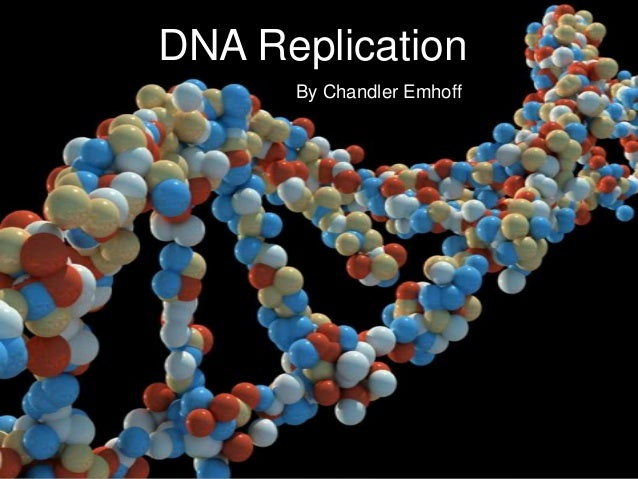 DNA Replication By Chandler Emhoff