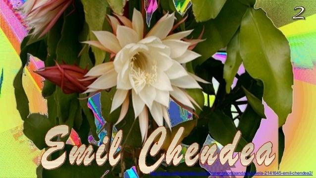 http://www.authorstream.com/Presentation/sandamichaela-2141645-emil-chendea2/