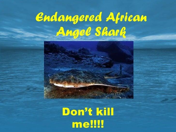 Endangered African Angel Shark Don't kill me!!!!