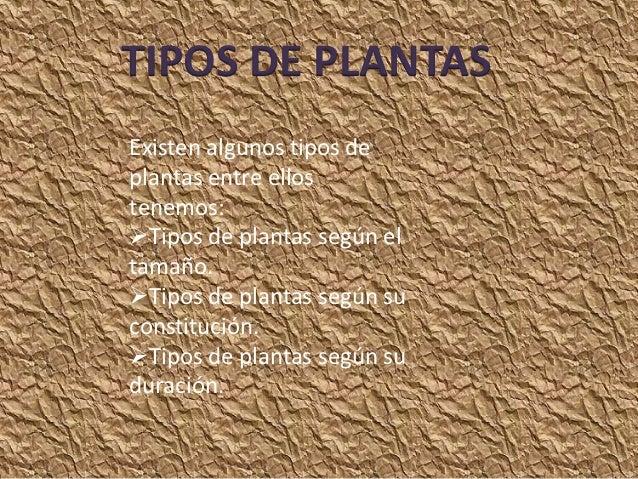 TIPOS DE PLANTASExisten algunos tipos deplantas entre ellostenemos:Tipos de plantas según eltamaño.Tipos de plantas segú...