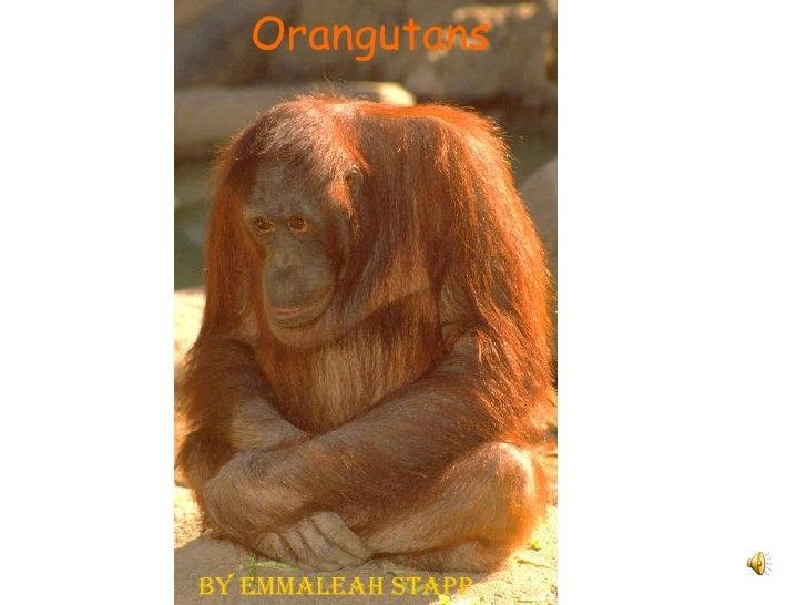 Orangutans By Emmaleah Stapp