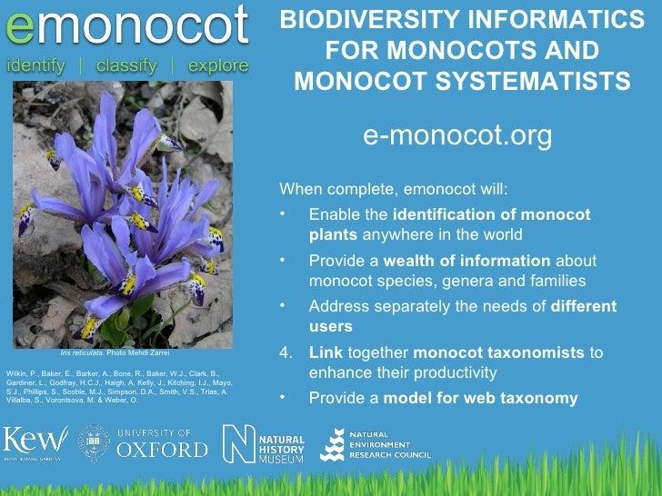 BIODIVERSITY INFORMATICS FOR MONOCOTS AND MONOCOT SYSTEMATISTS Iris reticulata . Photo Mehdi Zarrei Wilkin, P., Baker, E.,...