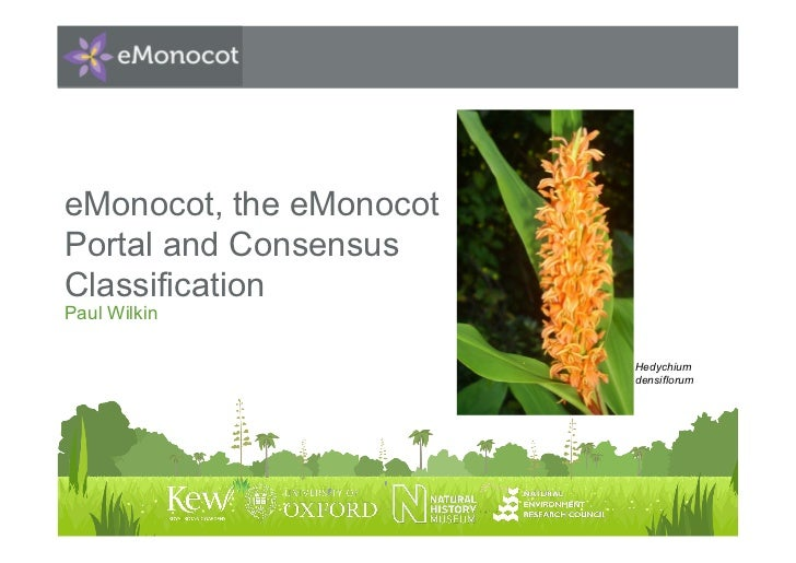eMonocot, the eMonocotPortal and ConsensusClassificationPaul Wilkin                         Hedychium                     ...